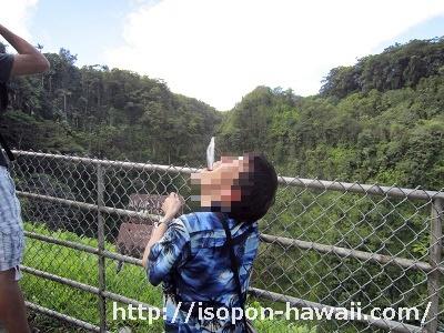 アカカ滝飲む