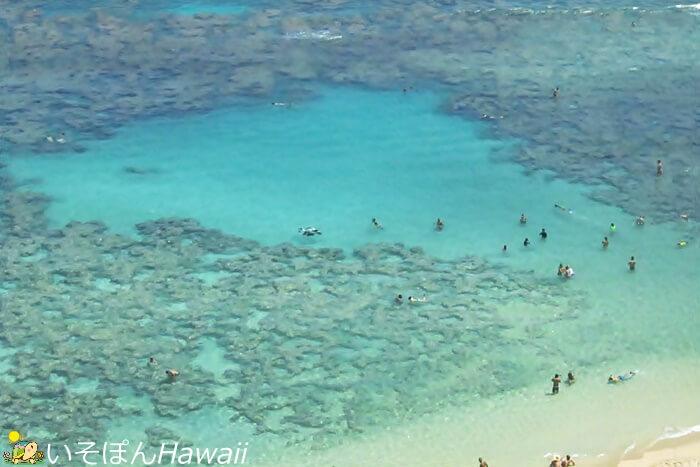 ハナウマ湾の展望台から見える景色6サンゴ礁 リーフ