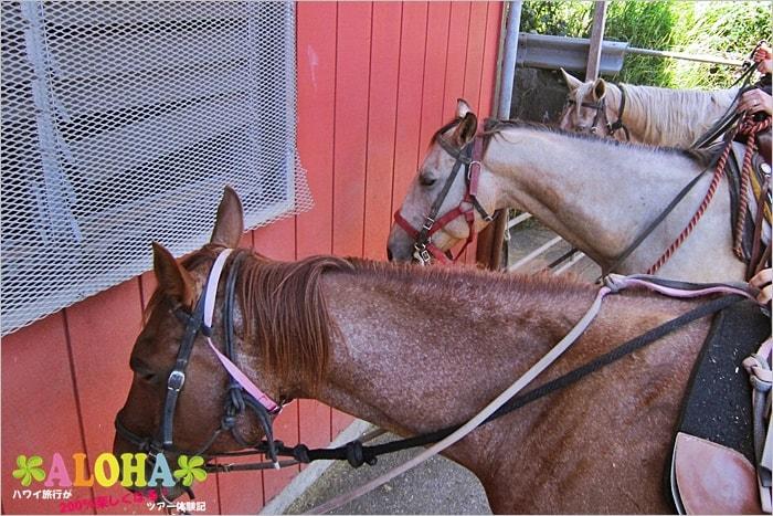 クアロアランチの乗馬スタート前2