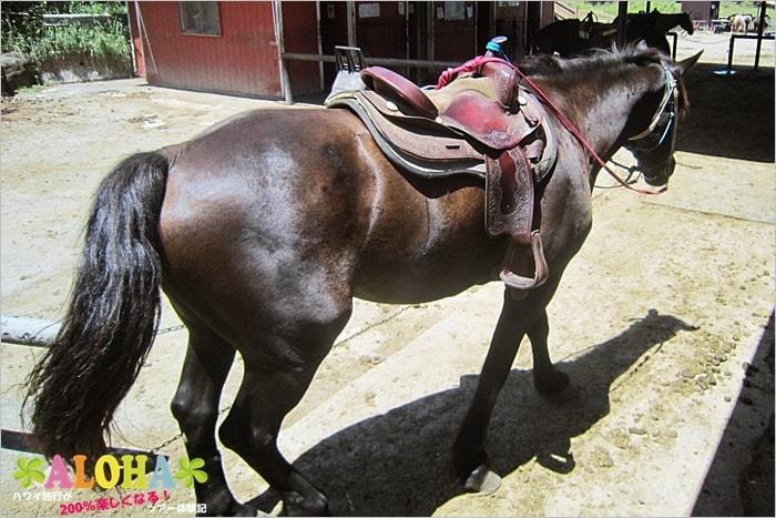 クアロアランチの馬