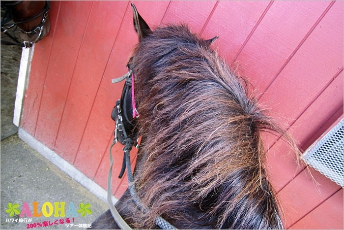 馬を上から見た画像
