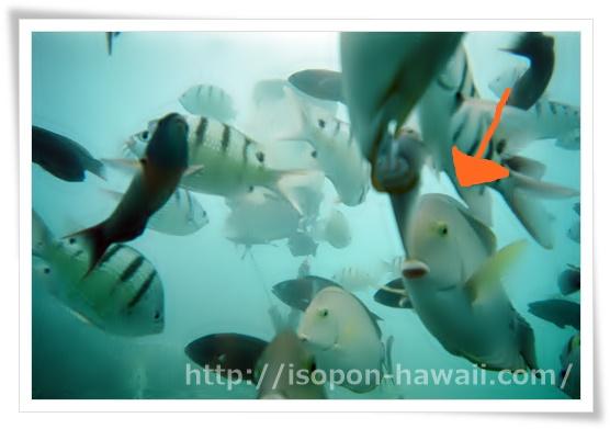 シーウォーカー魚の群れ