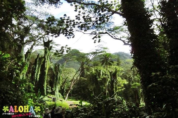 ハイキング中の景色1