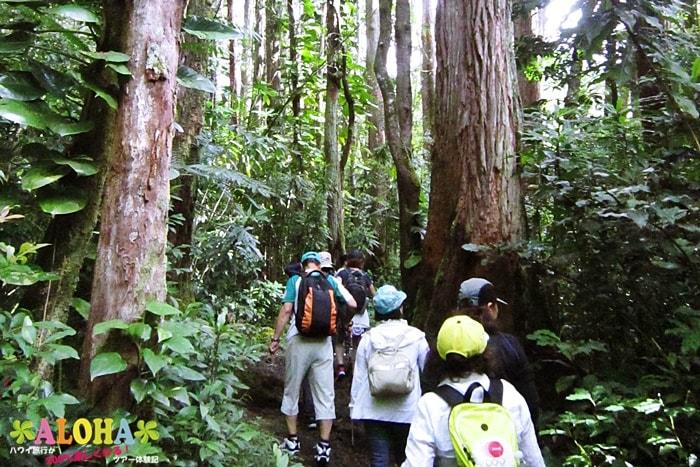 ハイキング中の景色4