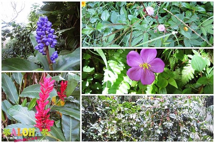 ハイキング中の景色5花の写真