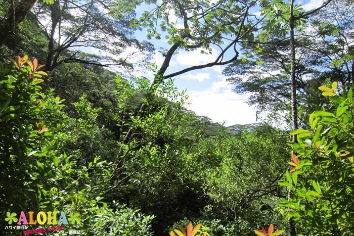 ハイキング中の景色7