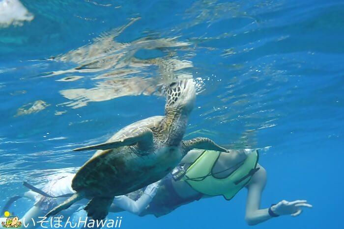 ハナウマ湾シュノーケルツアーの画像