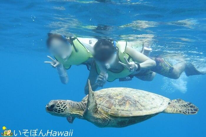 ウミガメと一緒に泳いでいる写真