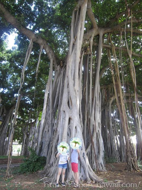 イオラニ宮殿のバニヤンツリー