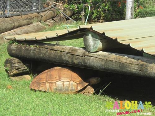 ホノルル動物園内画像11