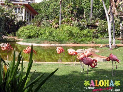 ホノルル動物園内2フラミンゴ画像