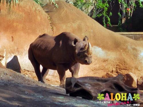 ホノルル動物園内25サイ画像