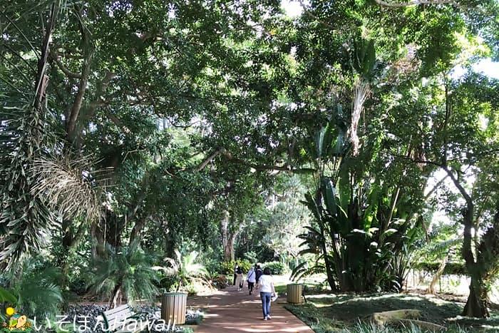 ワヒアワ植物園の園内