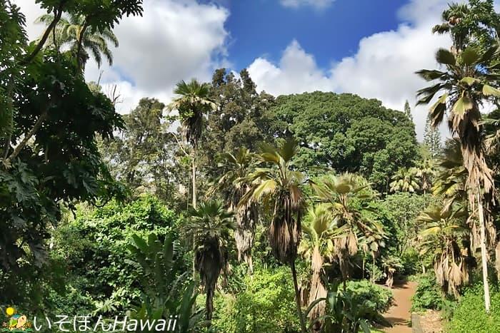 ワヒアワ植物園の熱帯植物