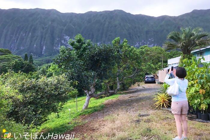 ハワイの風景と一体化