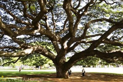 モアナルア・ガーデン日立の樹の内側